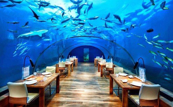 أروع المطاعم تحت الماء