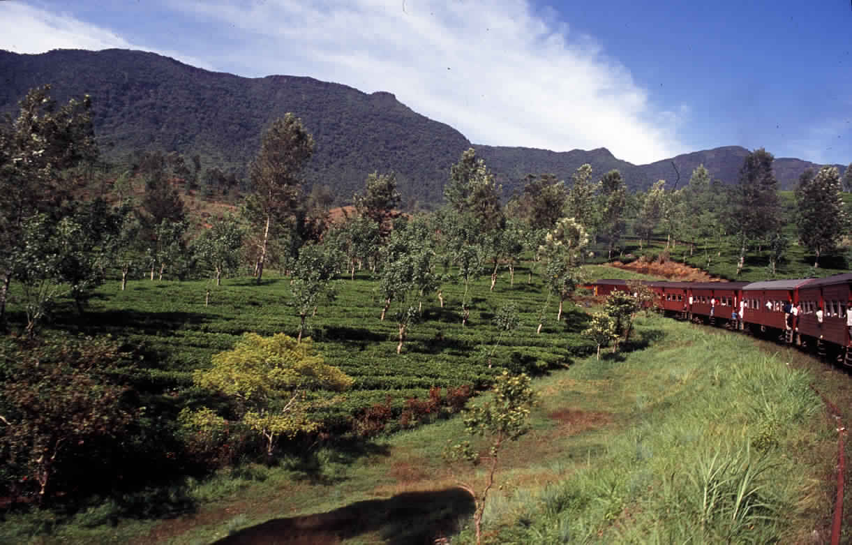 افضل الأماكن السياحية في كولومبو سريلانكا (3)
