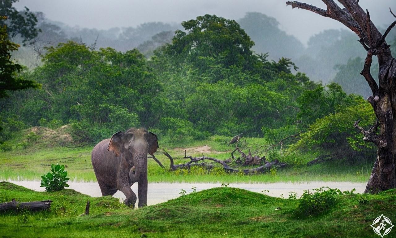 افضل الأماكن السياحية في كولومبو سريلانكا (7)