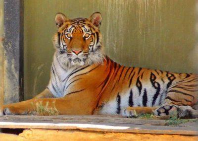 افضل الانشطه في حدائق حيوانات تركيا (1)