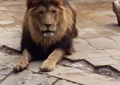 افضل الانشطه في حدائق حيوانات تركيا (2)