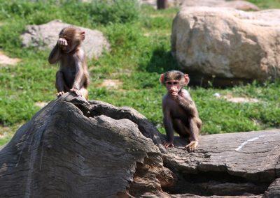 افضل الانشطه في حدائق حيوانات تركيا (3)