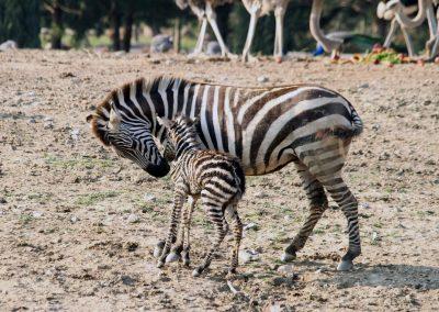 افضل الانشطه في حدائق حيوانات تركيا (5)