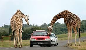 افضل حدائق حيوانات متميزه في تركيا
