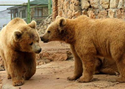 افضل الانشطه في حدائق حيوانات تركيا (8)