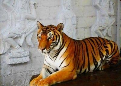 أكواريوم ساموي و حديقة النمور