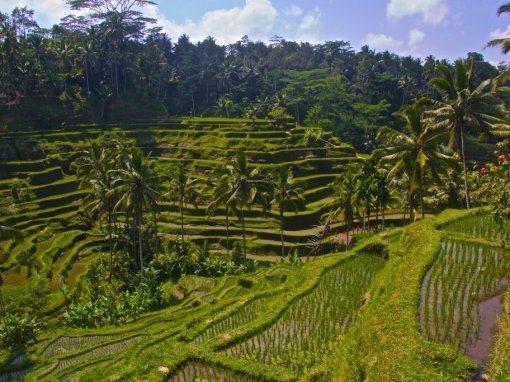 أشياء غير تقليدية في بالي