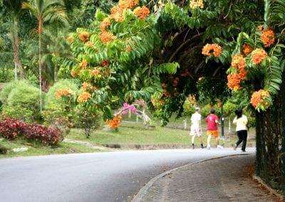 الحديقة النباتية جزيرة بينانج ماليزيا