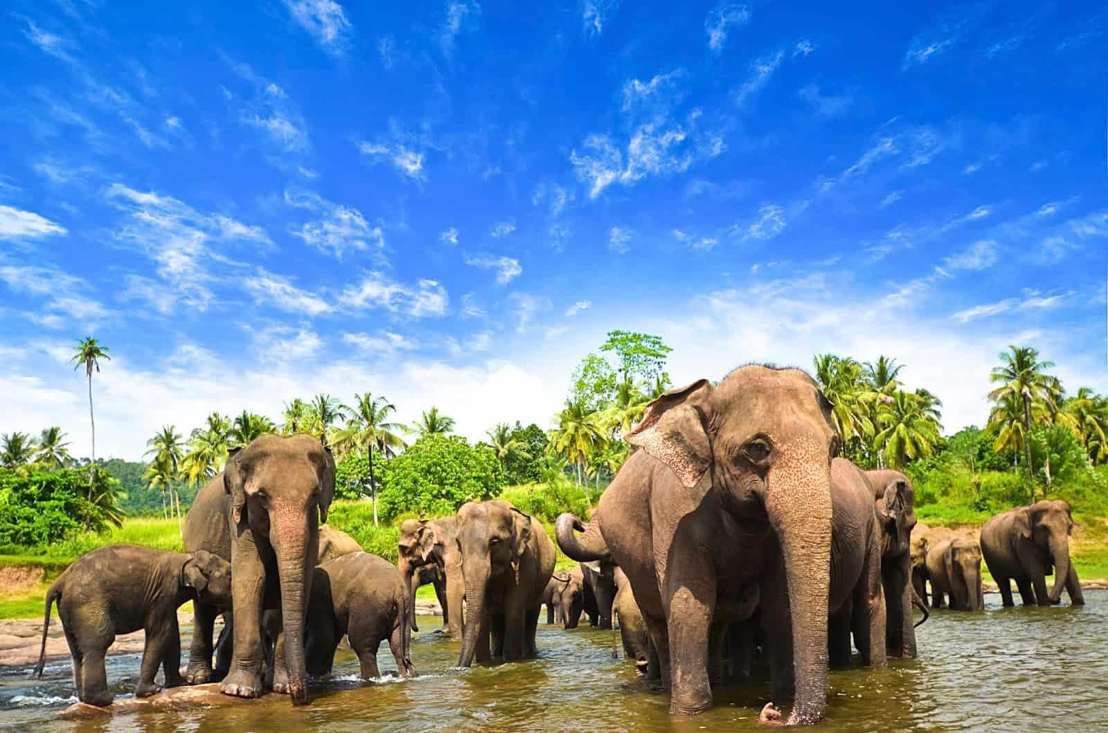 افضل واجمل 5 اماكن سياحية فى سريلانكا