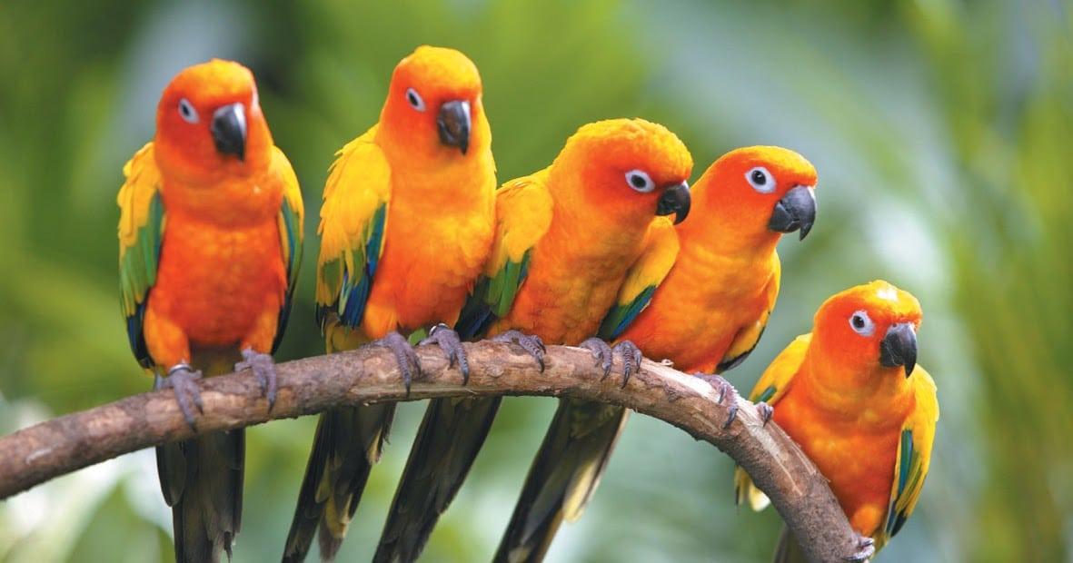 منتزه يورونغ للطيور سنغافورة