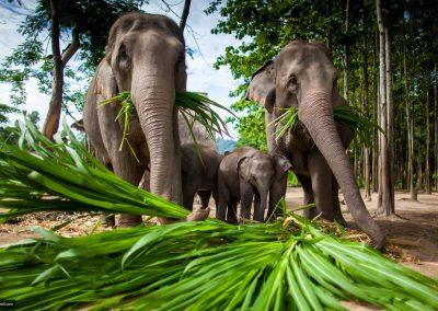 غابات تايلاند