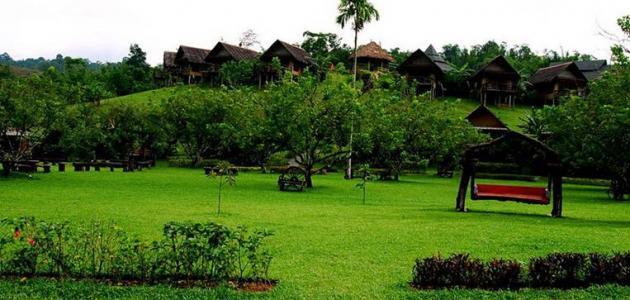 مصنع الشاى فى اندونيسيا