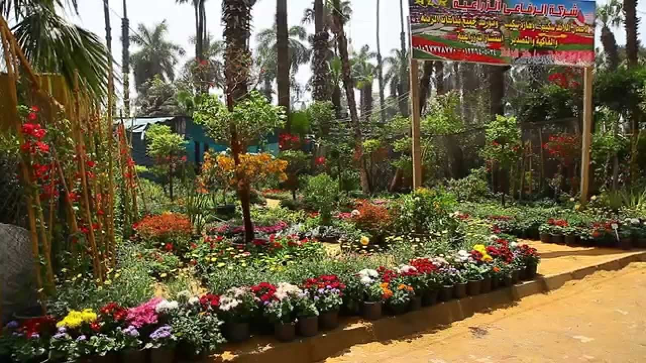 حديقه الاورمان مصر