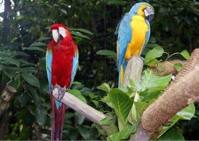 حديقة الحيوانات فى سنغافورة 45