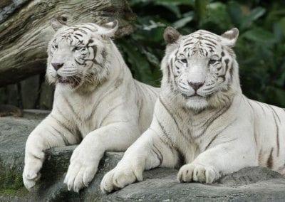 حديقة الحيوانات فى سنغافورة 63