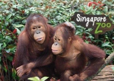 حديقة الحيوانات فى سنغافورة 78