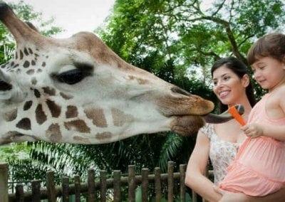 حديقة الحيوانات فى سنغافورة 96