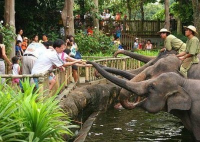 حديقة الحيوانات فى سنغافورة