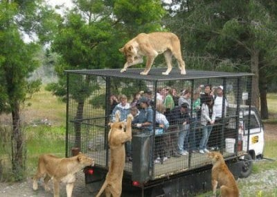 حديقة الحيوانات فى سنغافورة33