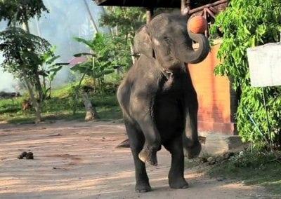 حديقة حيوان بوكيت