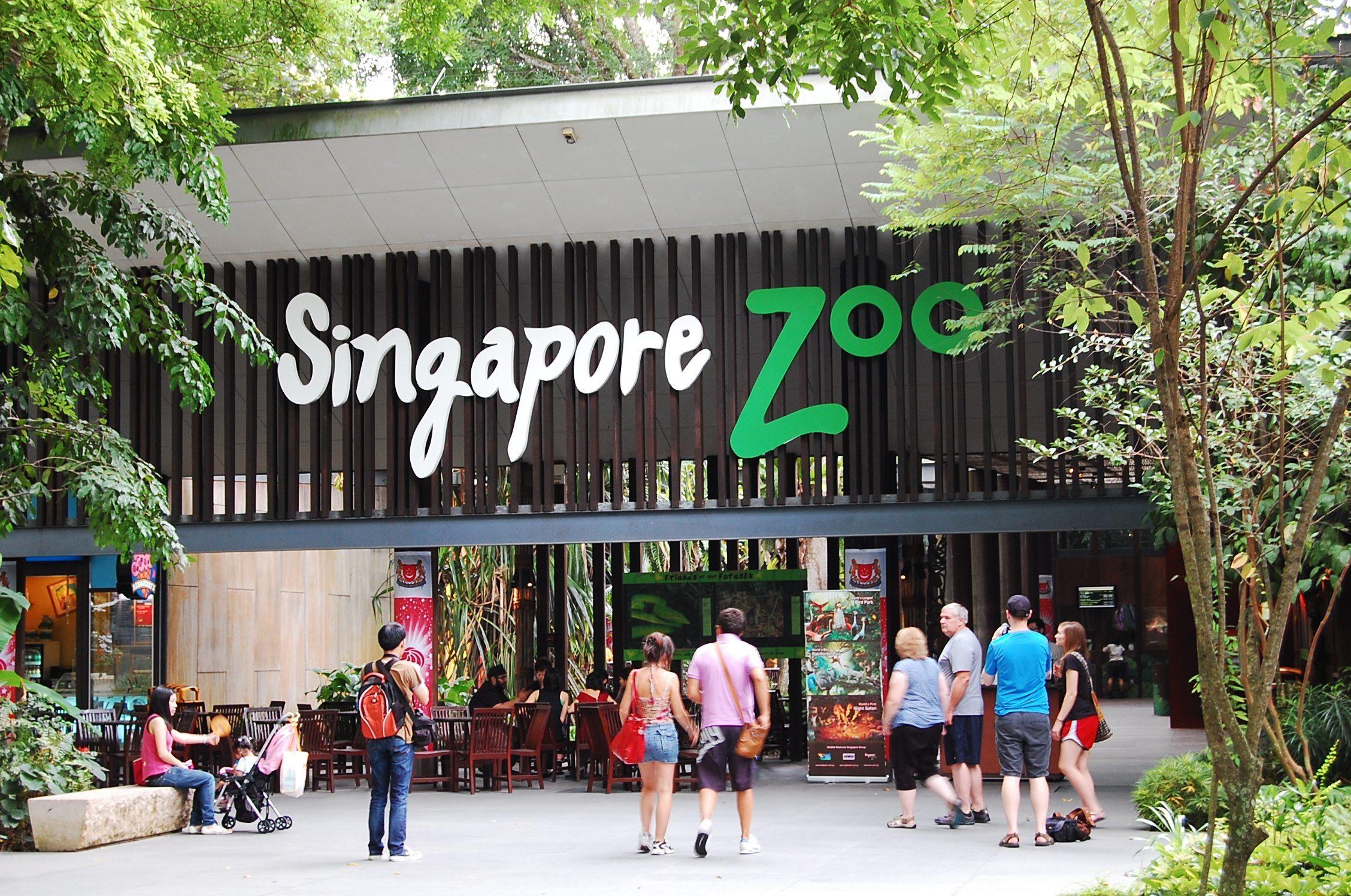 Singapur Hayvanat Bahçesi'nde en iyi 10 aktiviteleri