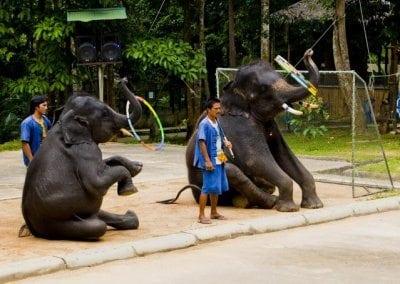 حديقة سفاري نا موانج