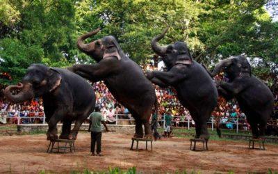 Kolombo Zoo