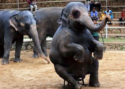حديقة حيوان كولومبو