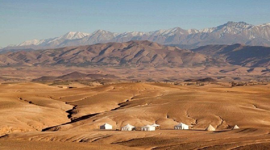 سكارابيو صحراء أغافاي المغرب