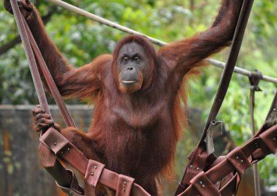 حديقه القرود جزيره بينانج