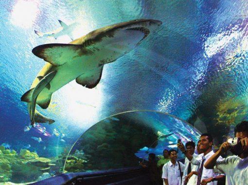 عالم ما تحت البحار أكواريوم كوالالمبور Aquaria KLCC