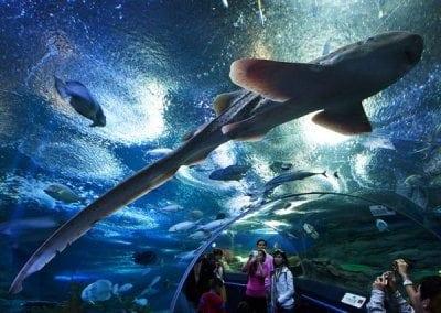 عالم ما تحت الماء بتايا