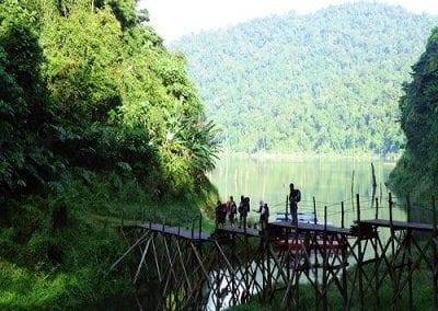 محمية غابة بلوم ولاية بيراك في ماليزيا