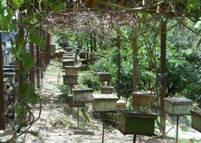 مزرعة الفريز الأحمر الهائل في مرتفعات الكاميرون (4)