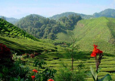 مزرعة الفريز الأحمر الهائل في مرتفعات الكاميرون (5)