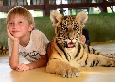 مملكة النمور