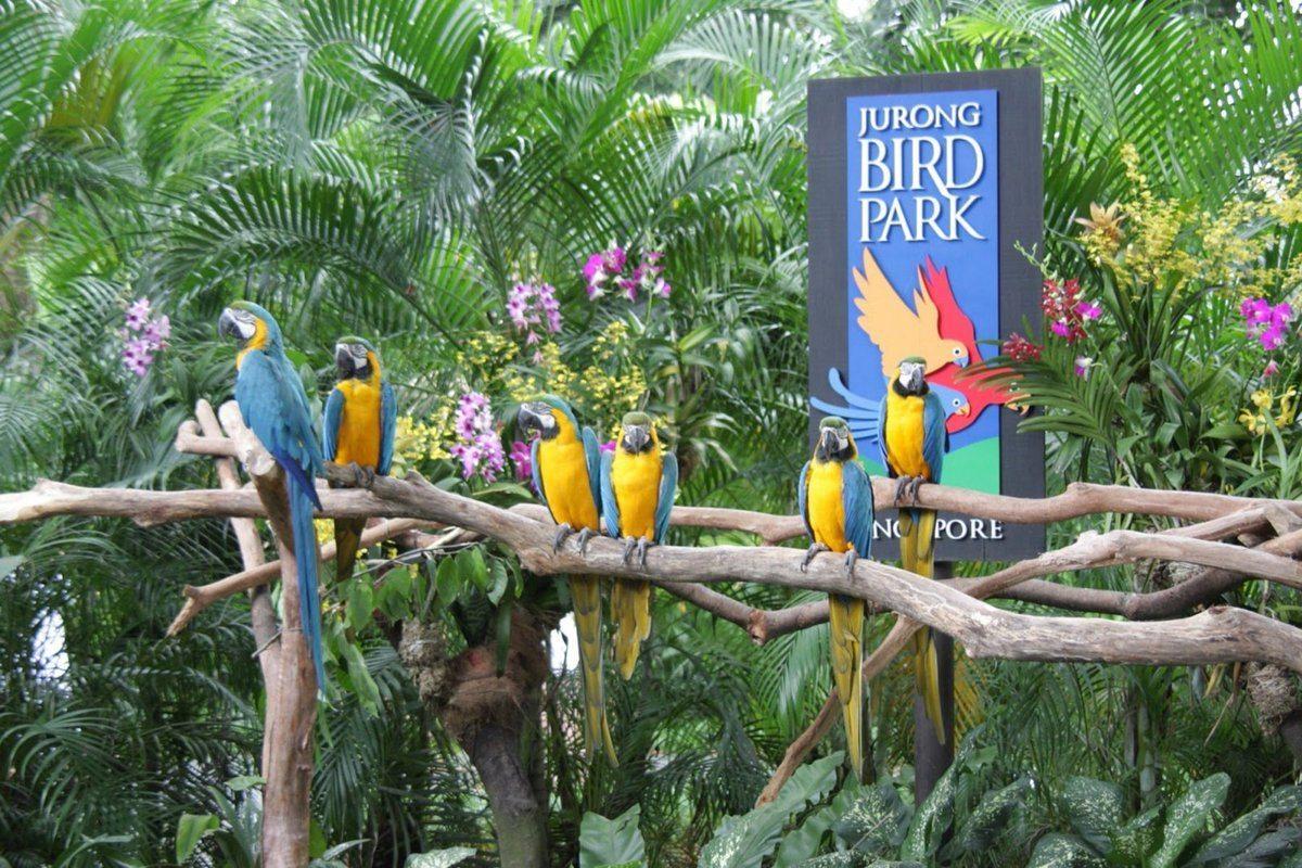 Yurong Bird Park Singapore'da en iyi 10 Aktiviteleri