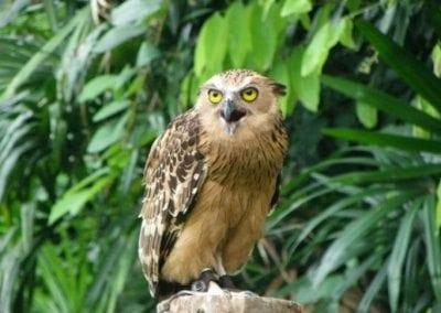 منتزه يورونغ للطيور فى سنغافورة