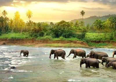 Sri Lanka Paradise of the World