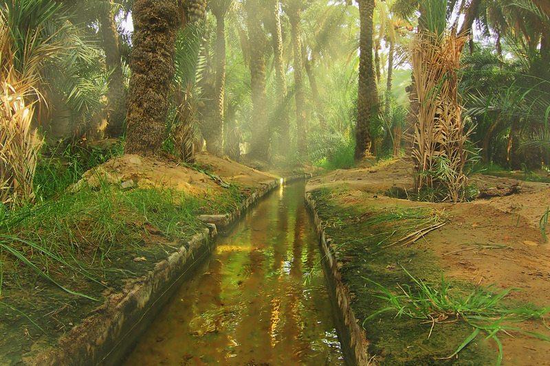 أنشطة في واحة العين أبو ظبي من اجمل الواحات فى الخليج العربى والامارات تحديدا