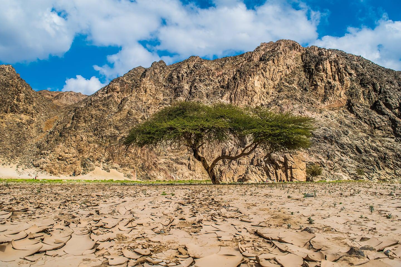 وادي الجمال وجبل حماطه مصر