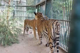 Lo zoo egiziano