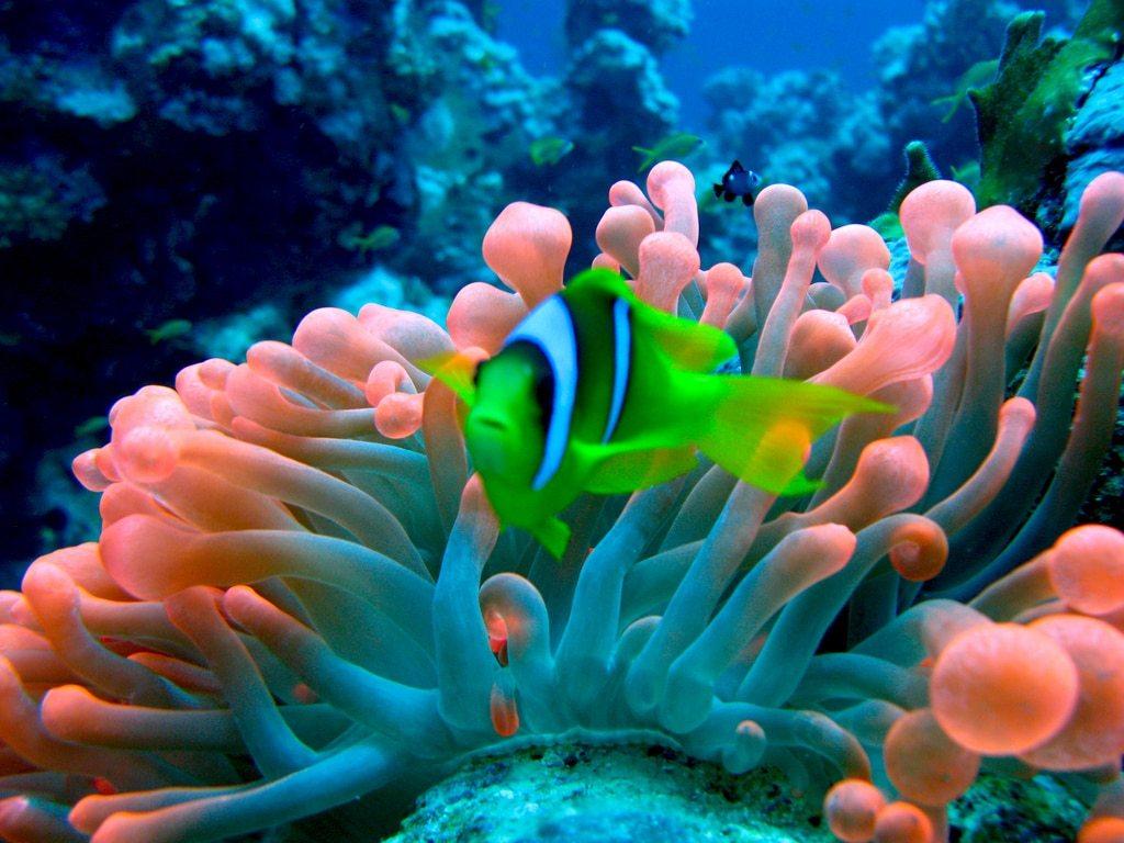 رحلات الدوني في جزر المالديف