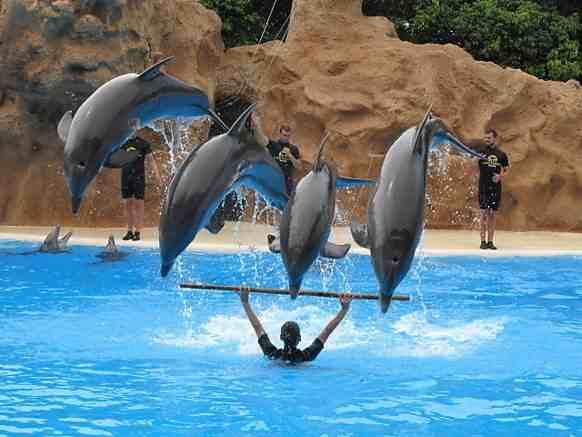 عرض الدلافين