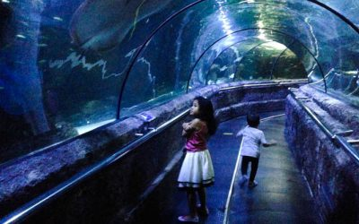 Tour in the world of the sea