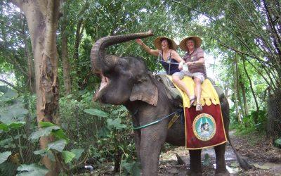 Tour a Bali Safari Park