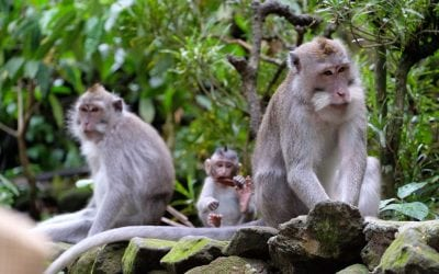 Tour in Monkey Forest Ubud in Bali