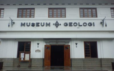 Tour in the Museum of Geology