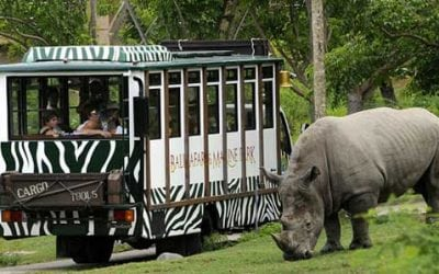 Tour in the Ponshak Safari Park