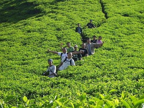 مصنع الشاى فى اندونيسيا | اكتشف روعه وجمال مصنع الشاى فى اندونيسيا